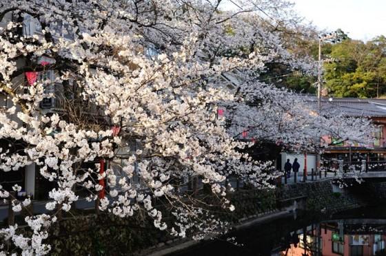 20140402城崎温泉の桜