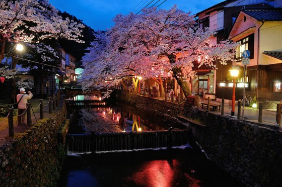 城崎温泉 木屋町通りの桜
