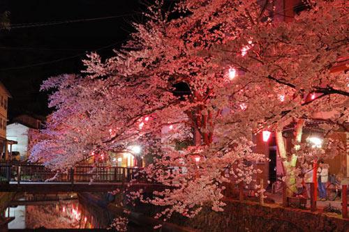 2010年4月3日の木屋町通りの桜